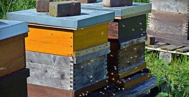 L'installation de ruches dans les entreprises et les enjeux
